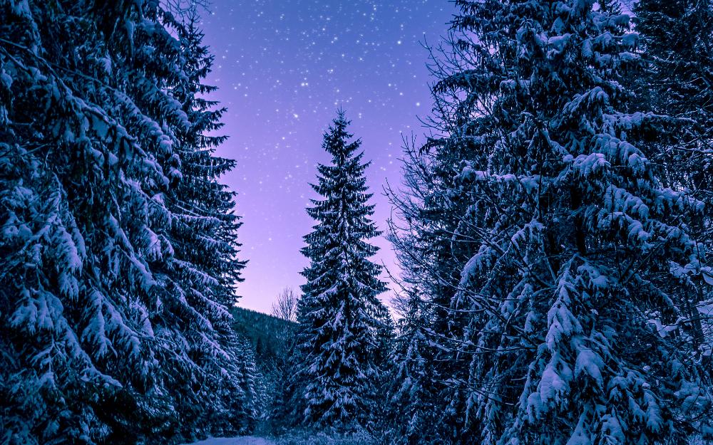 Winter Wonderland Wallpaper Ipad