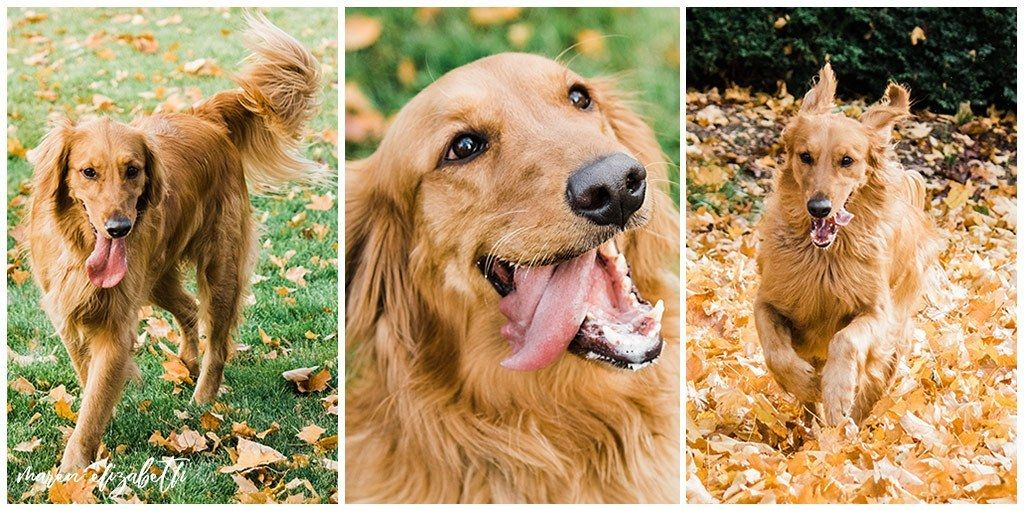 Rover Dog Sitters 2018 Dogs Choosing A Dog Dog Photos