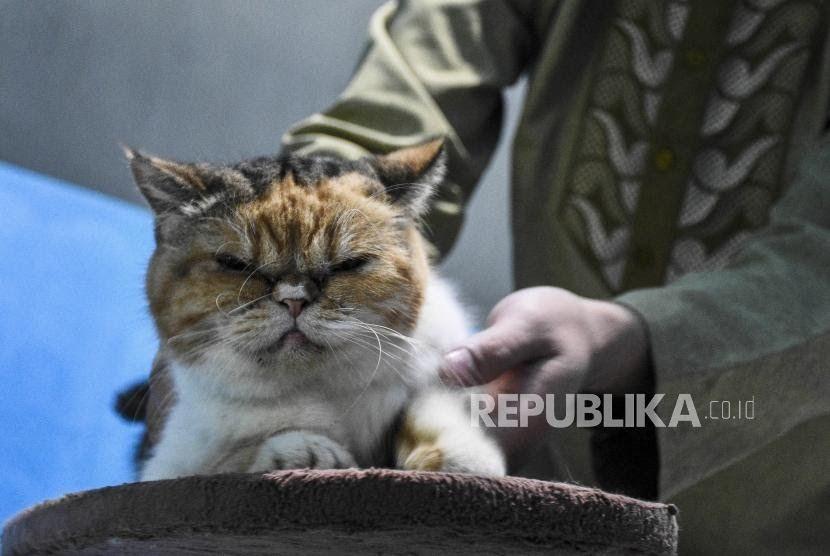Gambar Kucing Yang Belum Diwarnai Di 2020 Gambar Kucing Lucu