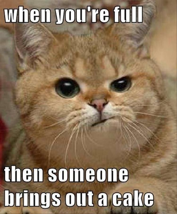 a993c7d5ea46441419d204dd63c9741a 38 super funny animal pics 38 super, funny animal pics and super,Its Always Something Meme
