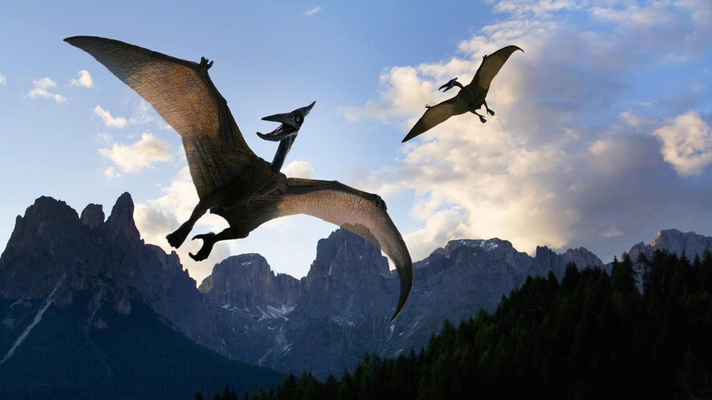 pterodactyl - Google Search