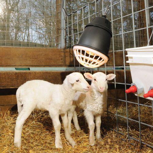 Prima Heat Lamp Goats Goat House Goat Barn