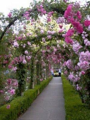 Butchart Garden rose arches #butchartgardens