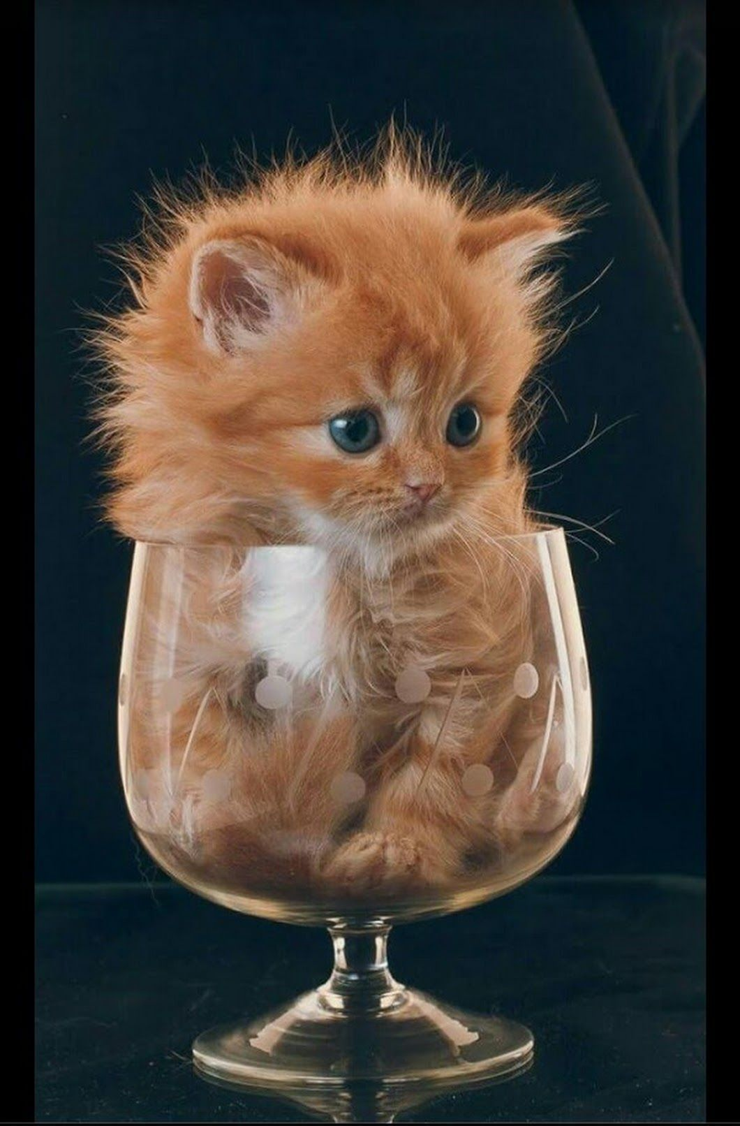 Kitty in a Cup make it out of orange juice ! Cute cats