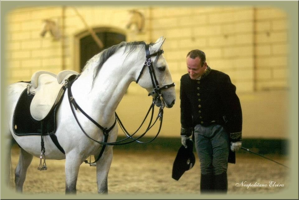 horse and rider engaged with each other   LYB - photo nding ... on