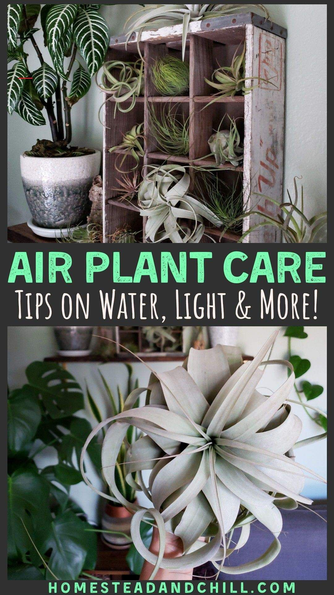 Air Plant Care 101 houseplant Read along to learn the