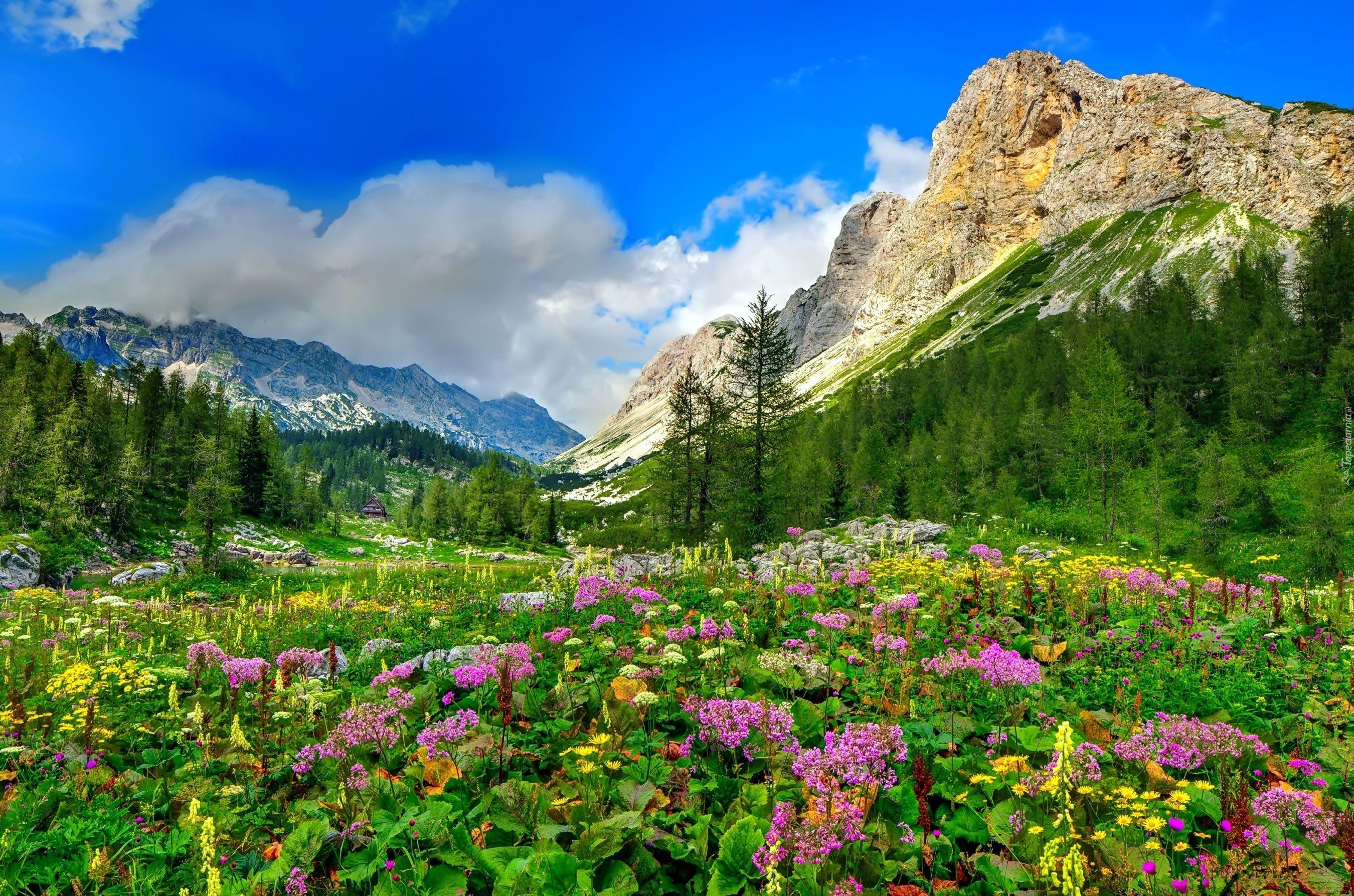 Wiosna Colorado Wildflowers Landscape Trees Colorado Image