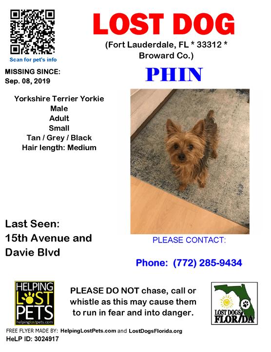 Lost Dog Have You Seen Phin Lostdog Phin Fortlauderdale 15th Avenue Davie Blvd Fl 33312 Broward Co Dog Losing A Dog Yorkshire Terrier Dog Fort