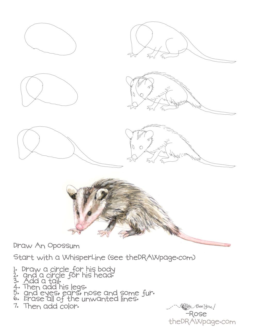 Uncategorized Possum Drawing blog page 5 of 20 the draw pagethe creative drawing an opossum page