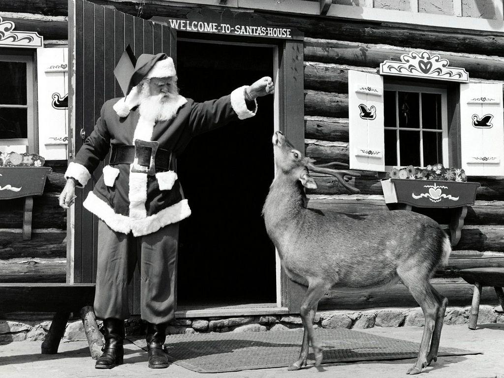 Reindeer Games Vintage christmas photos, Vintage