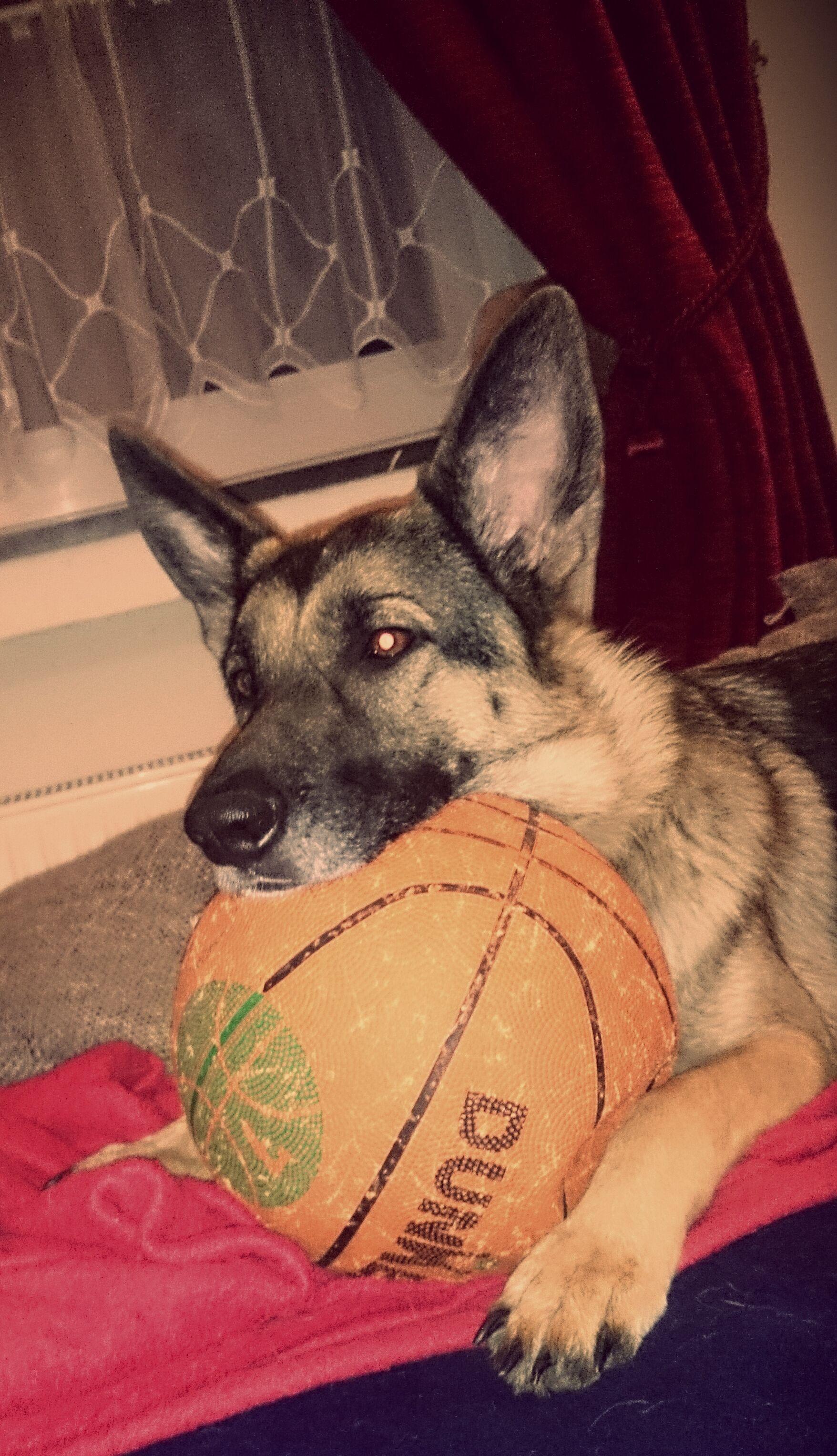 Luna Pawshake Tiere Hunde Tierhilfe