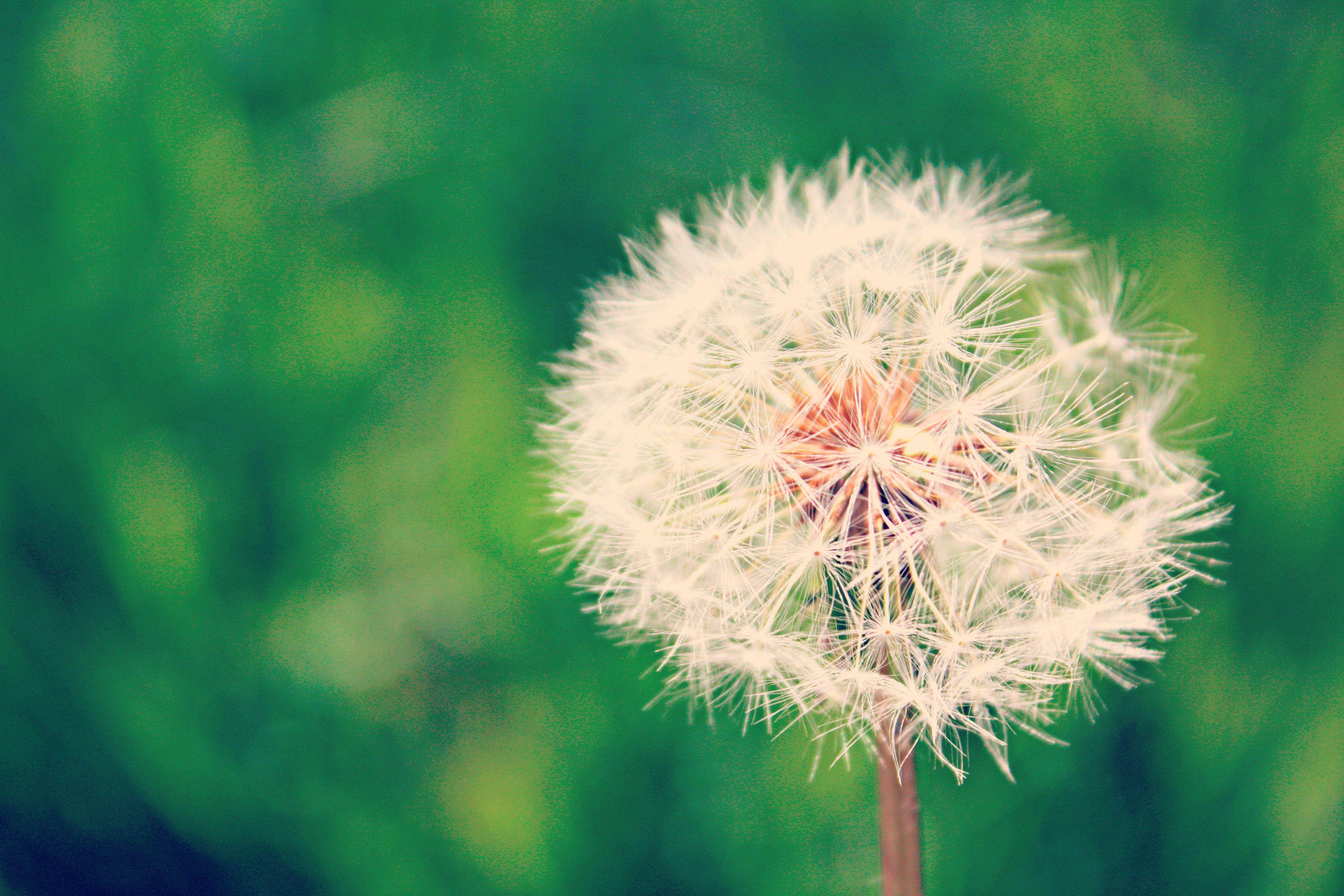 (Archivo BdF) Este artículo mo podía faltar para los que acabamos de entrar de pleno en la primavera ;-) http://www.blogdelfotografo.com/20-consejos-fotografia-primavera/