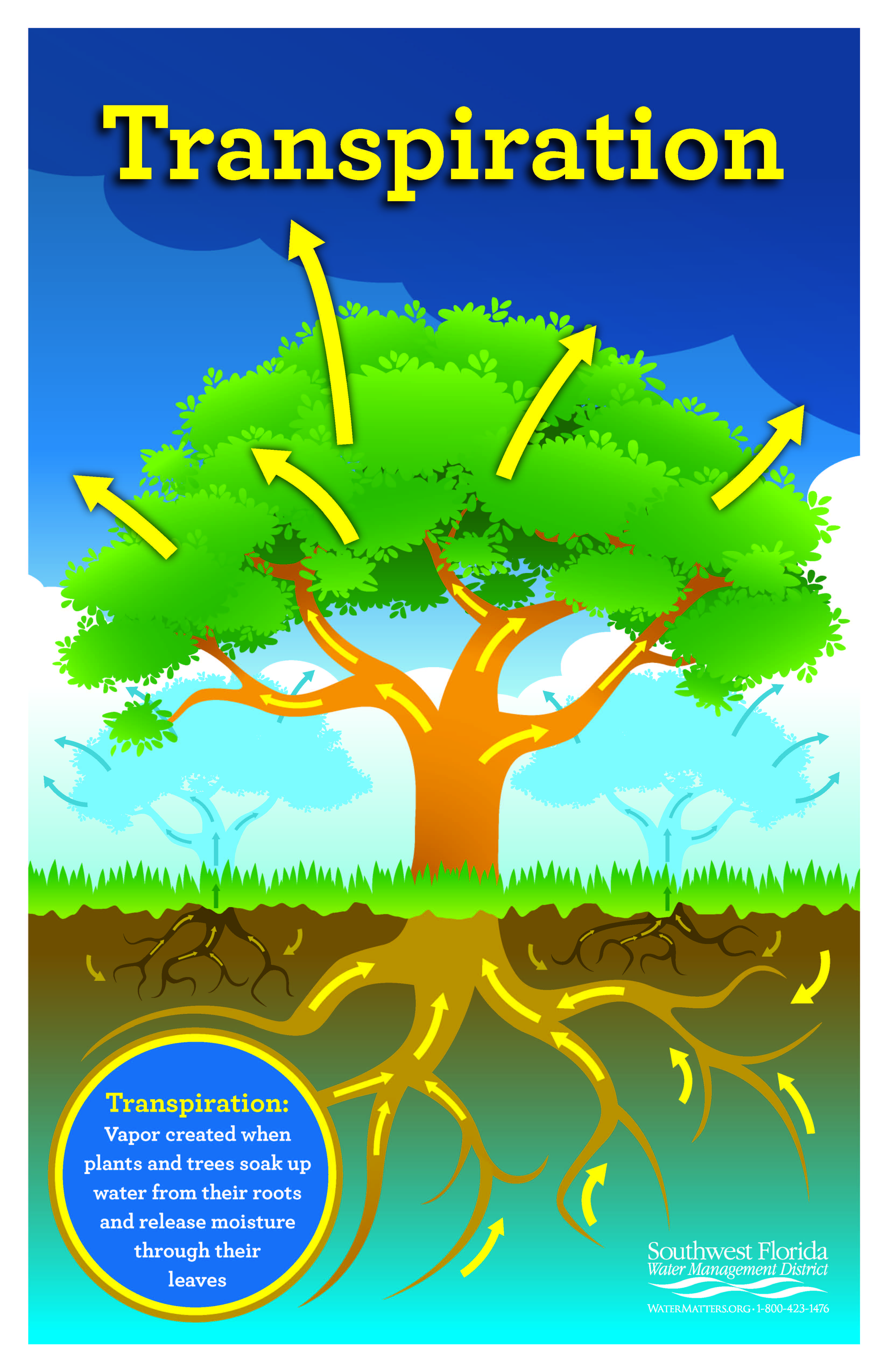 Order or download a transpiration poster | Learning is Fun | Water Cycle, Water conservation