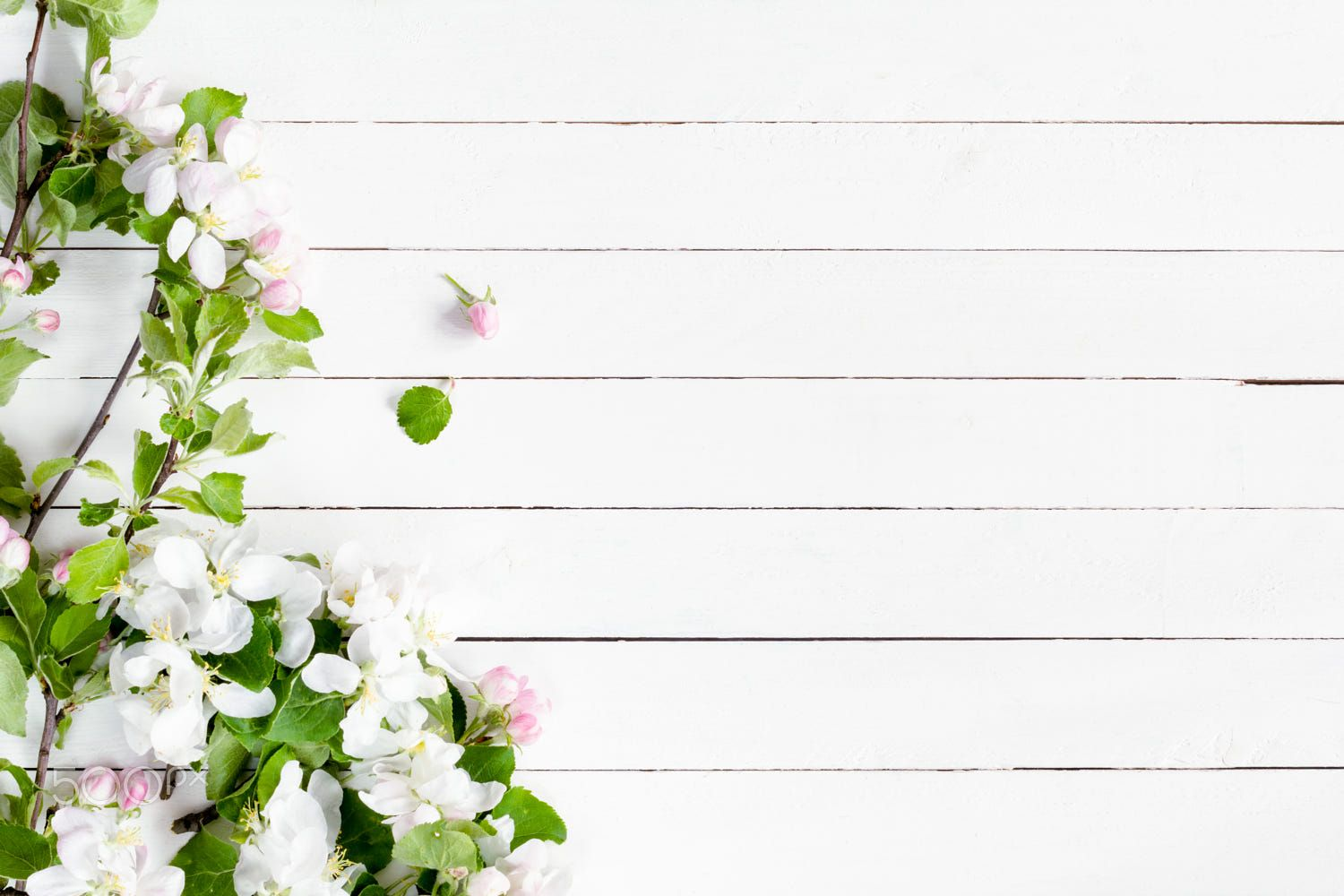 White wooden background and blossoms by Vladislav Nosick