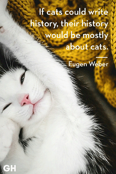 25 Quotes Only Cat Owners Will Understand