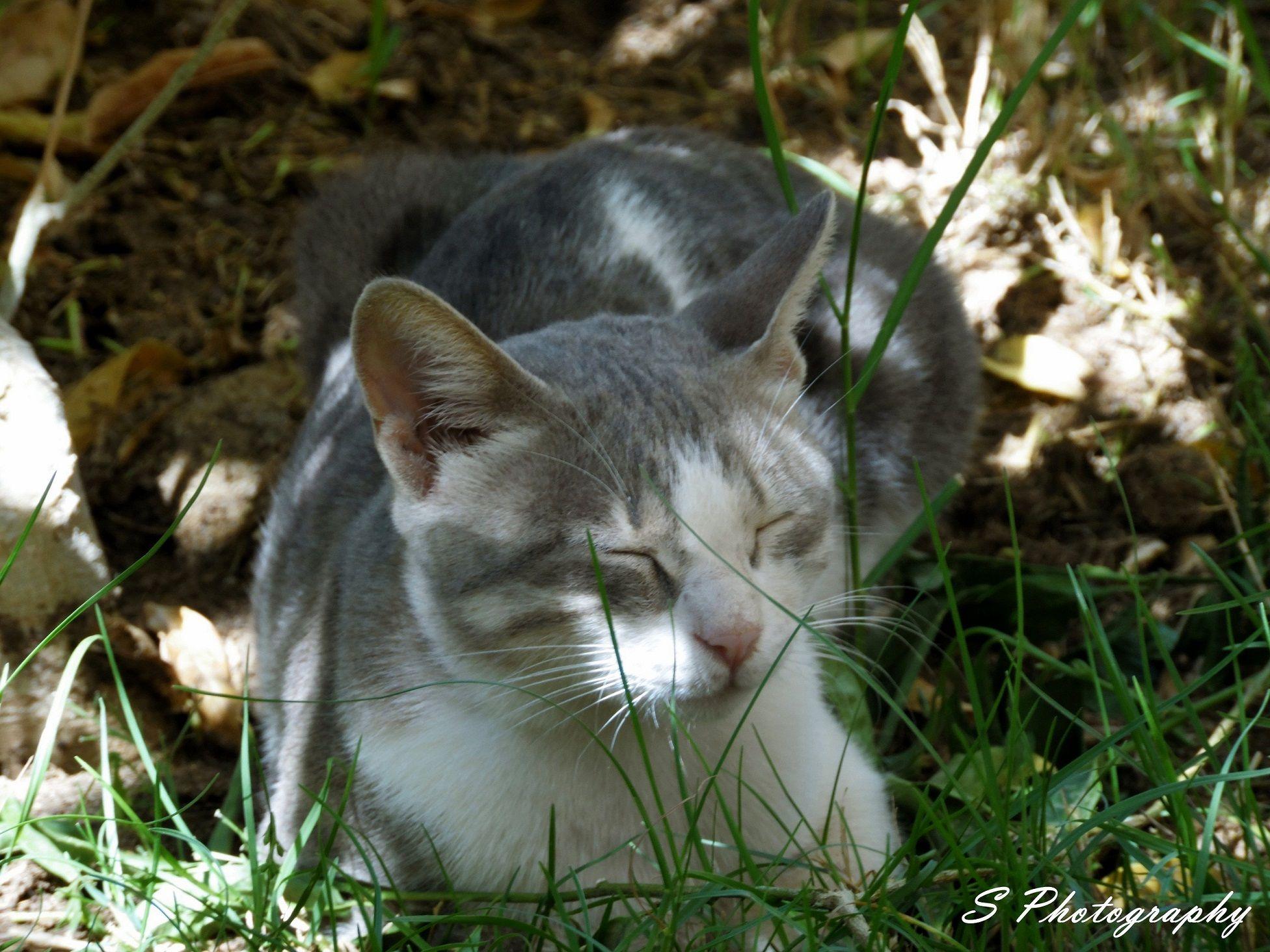 sleepy cat -5