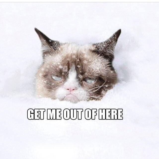 451835 Grumpy Cat Snow No Jpg 640 640 Grumpy Cat Grumpy Cat Quotes Funny Cat Memes