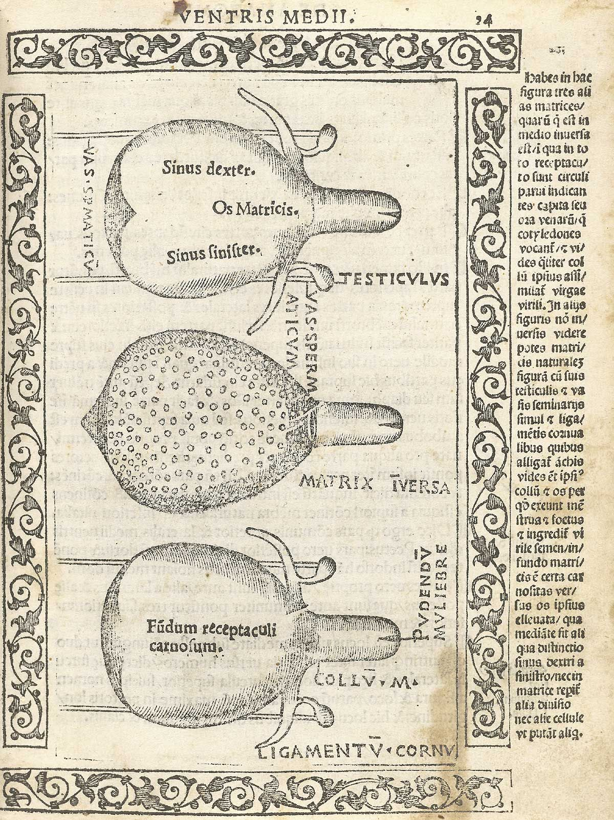Pin By Andrew Arov On Anatomia Carpi Pinterest Ancient Art