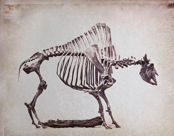 Bison Skeleton Raceytaysy Cute 3 Pinterest Animal