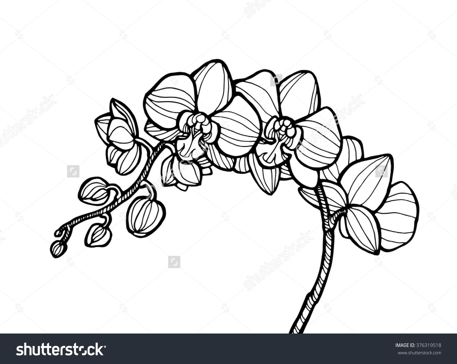 Exotic Orchid Flower Forest Wild Plant Vector Engraving Botany Artwork Coloring Book Page