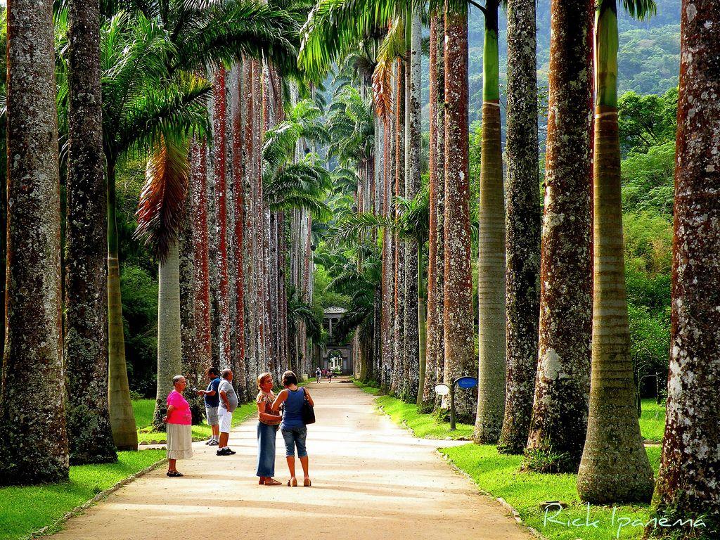 Image result for Rio de Janeiro Botanical Garden or Jardim Botânico, Rio de Janeiro