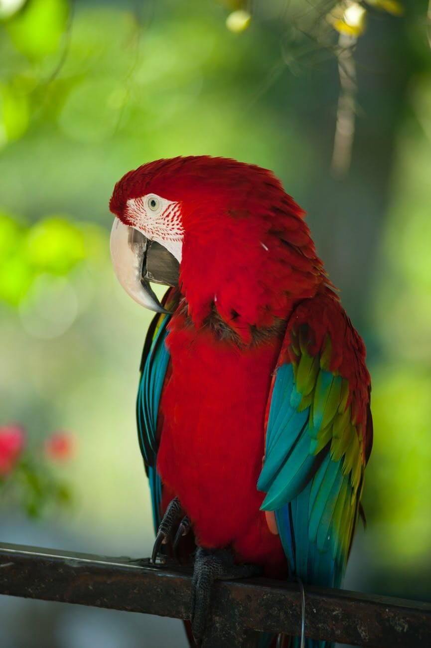 Cute Love Bird Colorful Parrots Hd Wallpaper Download Free 1680x1050 Free Hd Wallpaper Bird Parrot Full Pics Background Red In 2020 Best Pet Birds Parrot Image Animals