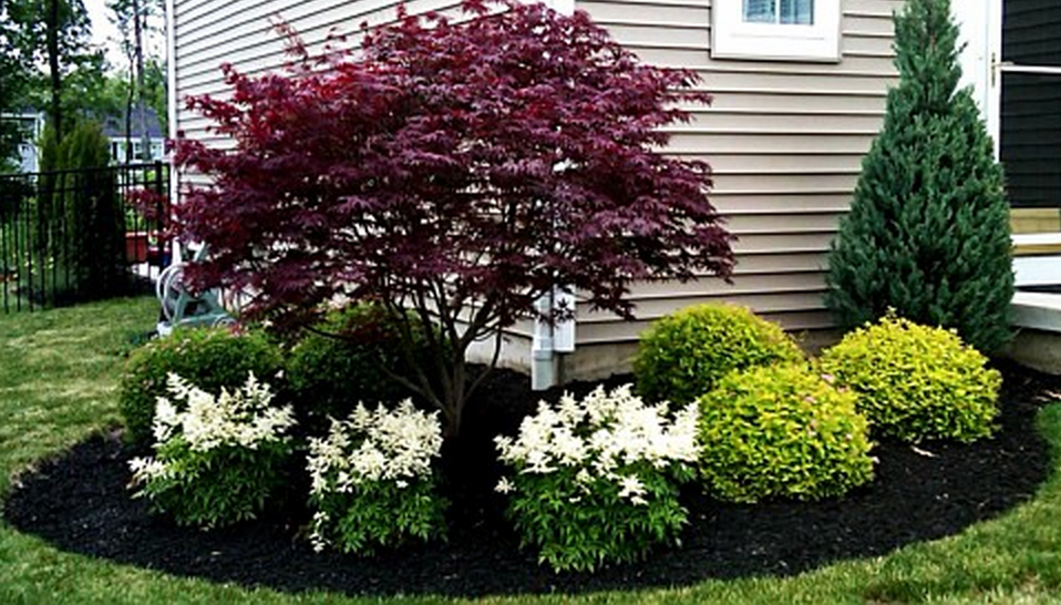 Japanese Maple With White Astilbe Front Yard Landscaping Design