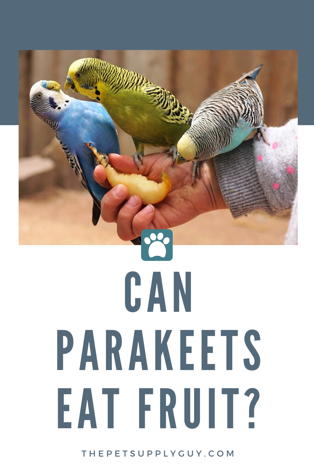 Can Parakeets Eat Fruit Complete List Of Fruits Eat Fruit