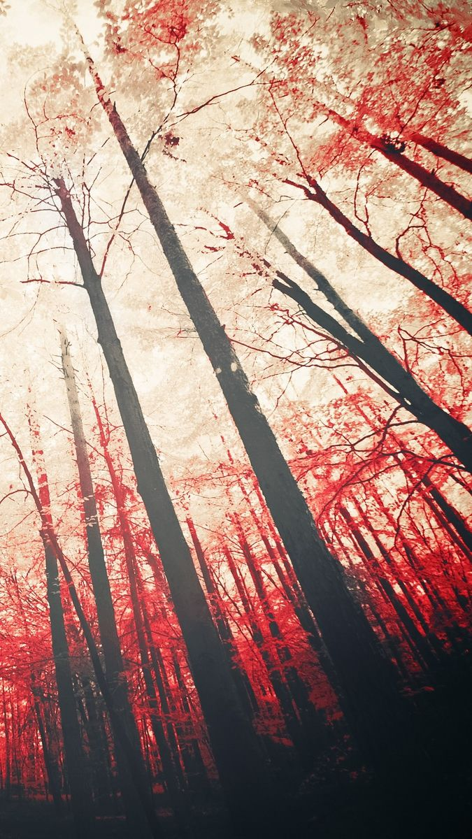 Red Trees Sunshine Iphone Wallpaper Iphone 6 Wallpaper Black And White Iphone Background Wallpaper Red Tree