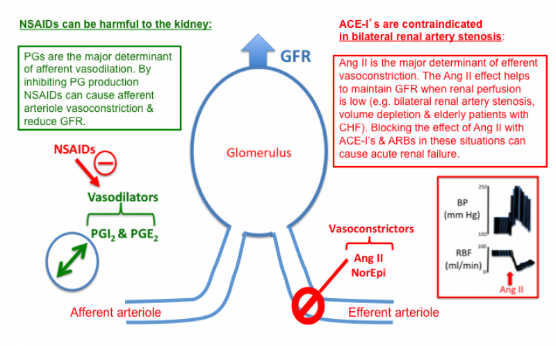 renal artery stenosis and ace inhibitor - Google Search