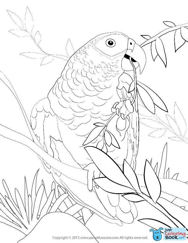 African Grey Coloring Page Coloring Pages To Print