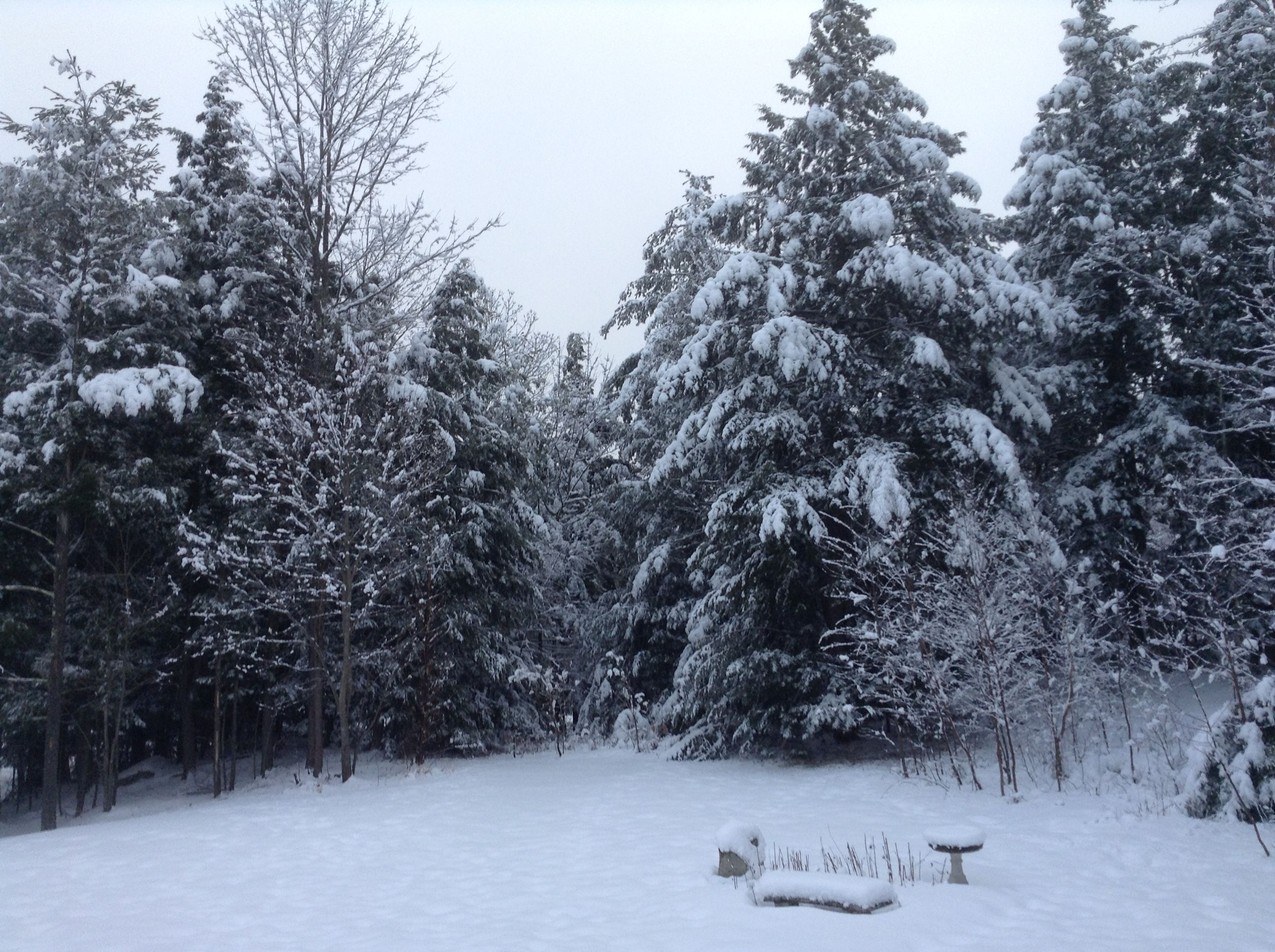 The 2017's heaviest snow!❄️☁️