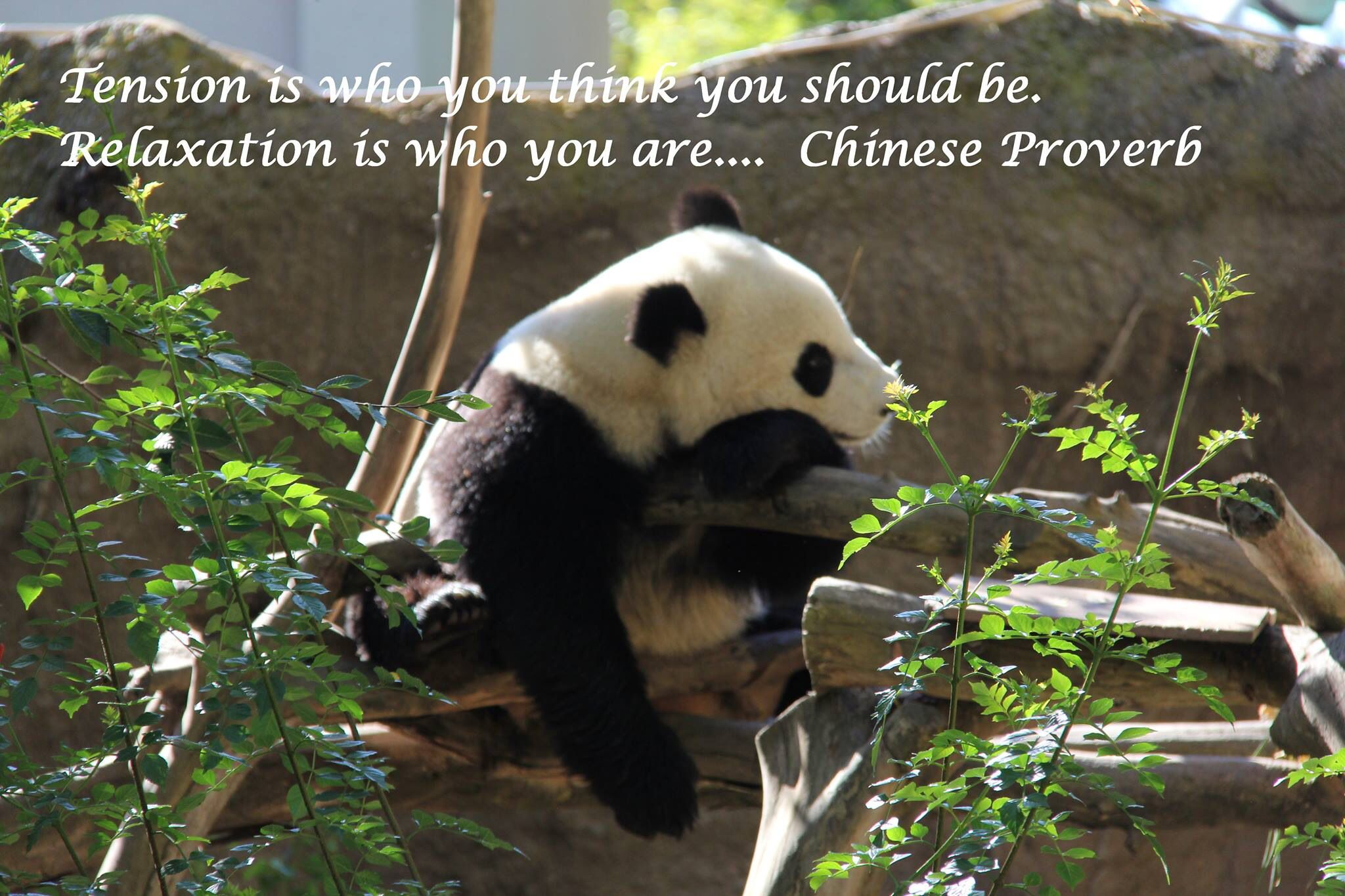 Tension is who you think you should be.  Relaxation is who you are .... Chinese Proverb