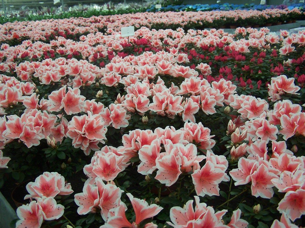 un mar de flores