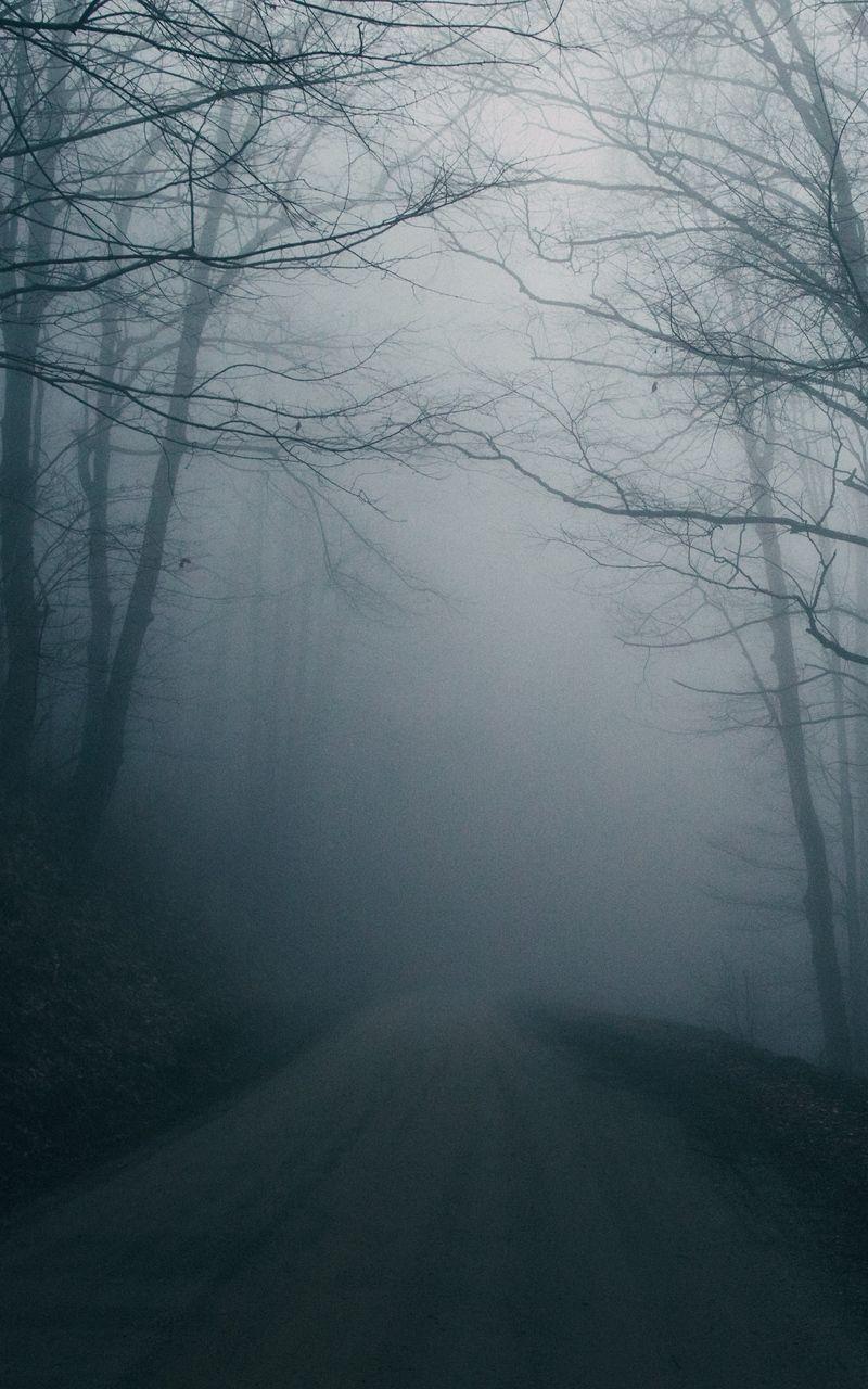 Wallpaper Trees Dark Gloomy Fog Road Apocalypse Aesthetic Dark Weather Weather Wallpaper