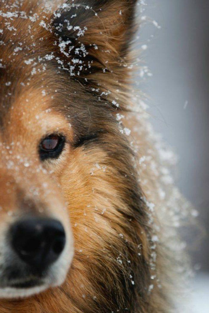 Die süßesten Bilder von Hunden! Hunde bilder