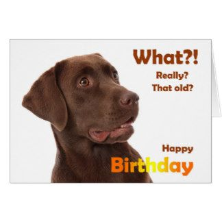 Image Result For Birthday Images Labrador Happy Birthday Dog Dog Birthday Wishes Happy Birthday Man