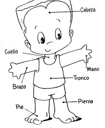 Fichas Del Cuerpo Humano Fichas Para Imprimir Selecciona La Ficha Que Te Inter Partes Del Cuerpo Humano El Cuerpo Humano Infantil Partes Del Cuerpo Preescolar
