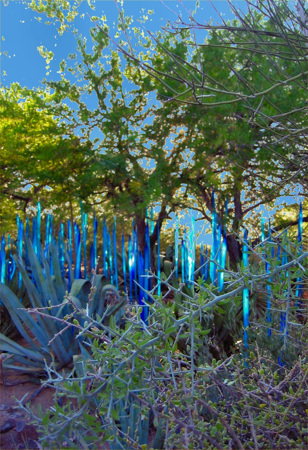 Chihuly Glass Sculpture Exhibit At The Desert Botanical Gardens In Arizona Soul