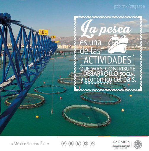 La pesca es una de las actividades que más contribuye al desarrollo social y económico del país.SAGARPA SAGARPAMX #MéxicoSiembraÉxito