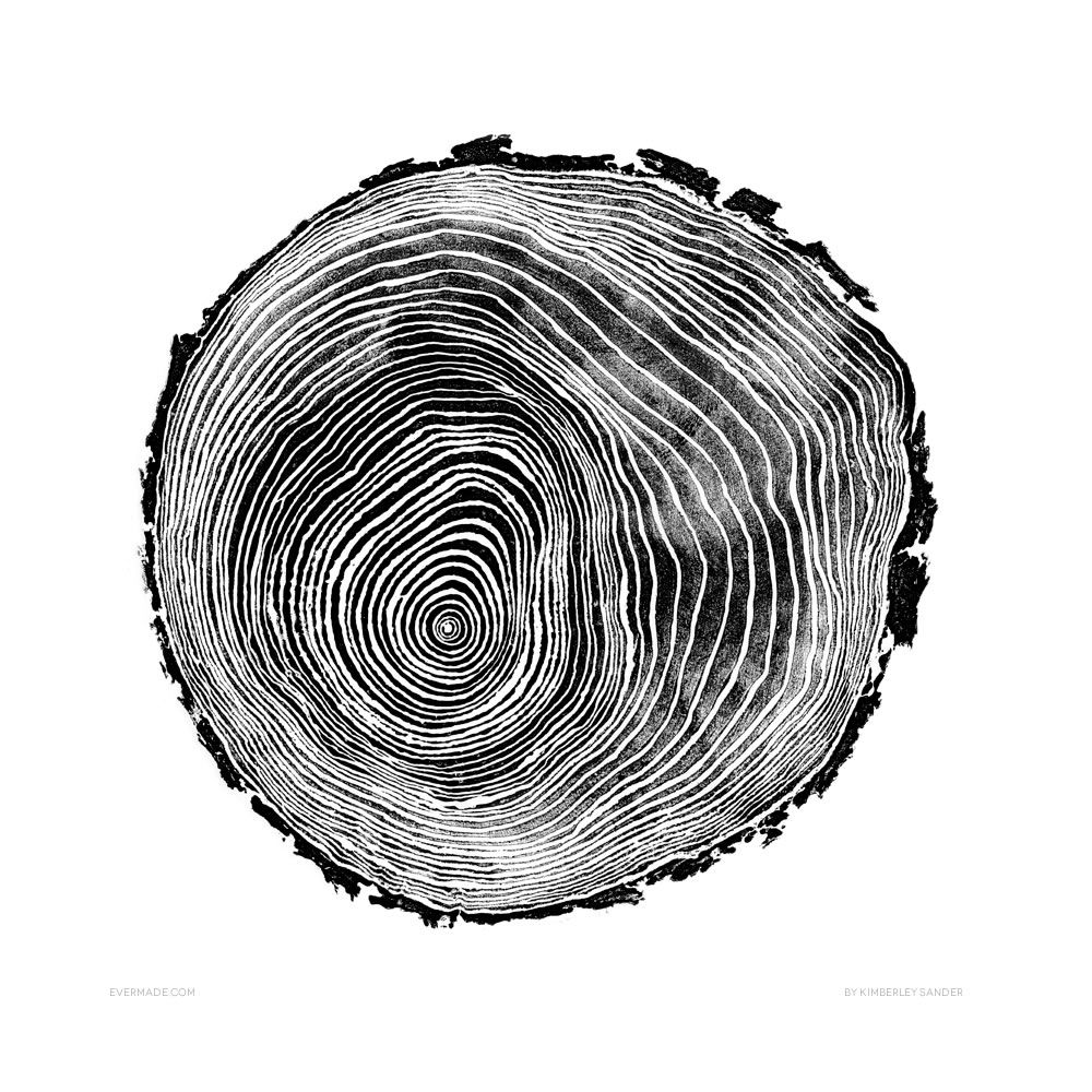 stock rings photo saw cut of and tree illustration textures vector trunk