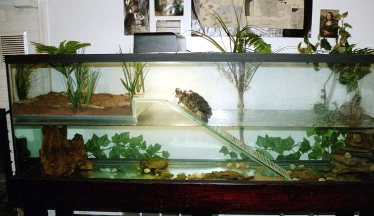 Tortuguero tortugas pinterest tortugas tortuga y for Acuario tortugas