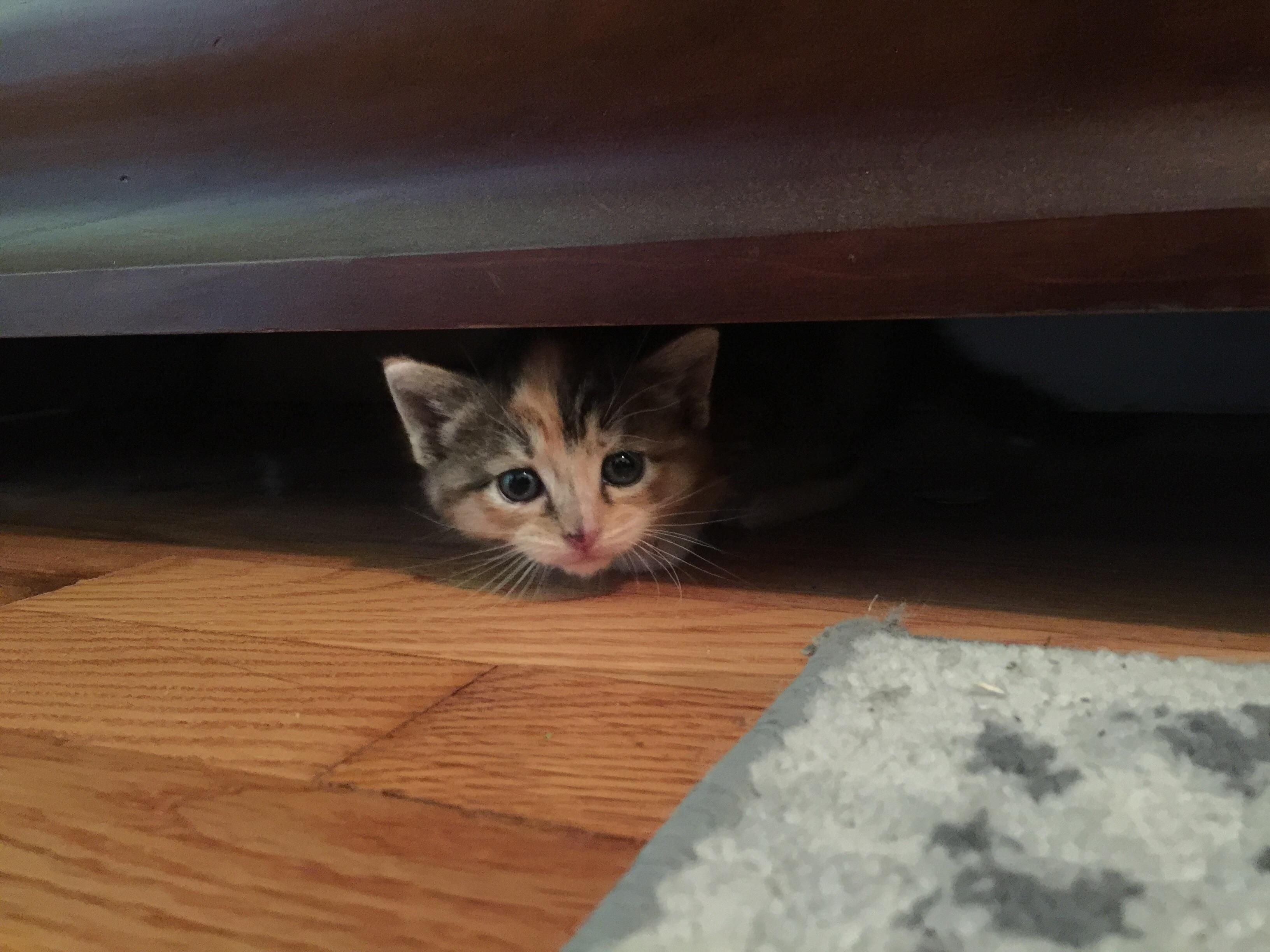 Peekaboo! Our kitty the day we rescued her hiding under