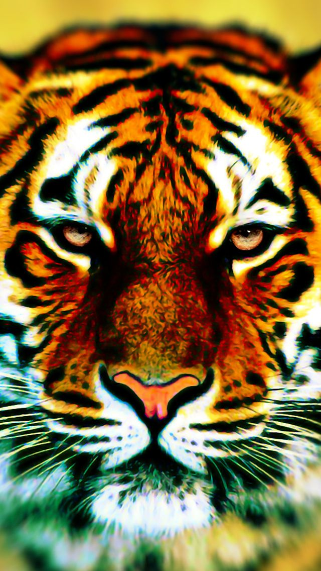 Tiger iPhone5 Wallpaper Animals