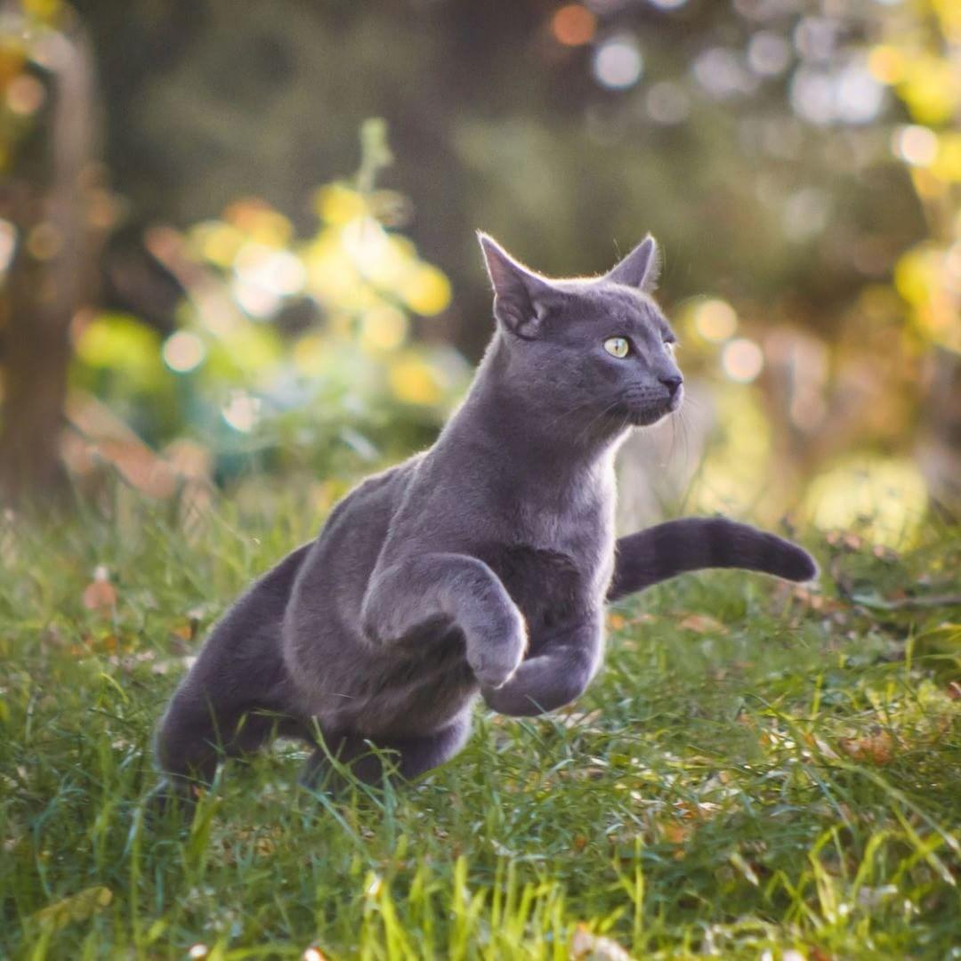 Épinglé par Galaxy of meows sur cats Faits de chat, Chat
