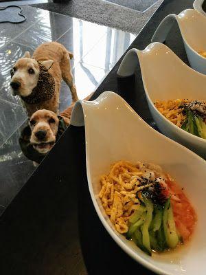 犬の手作りごはんに関するブログです 手作りドッグフード 料理 レシピ 犬 ご飯