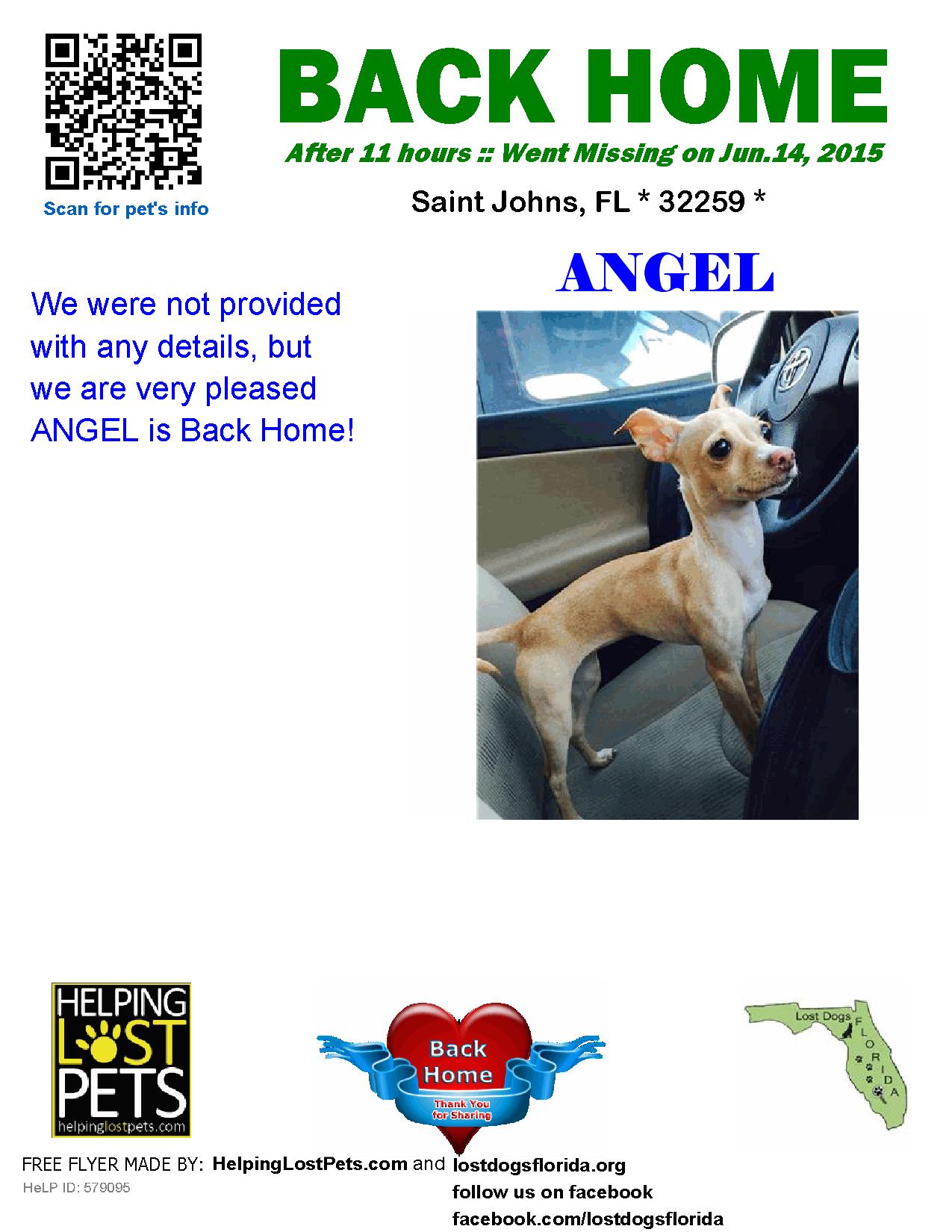 Helping Lost Pets Dog Chihuahua Back Home Losing A Dog