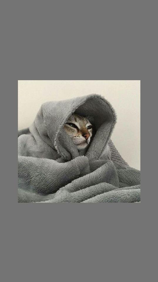 Cat Lockscreen Cute Aesthetic E Cat Cute Cat Wallpaper Animal Wallpaper Cat Aesthetic