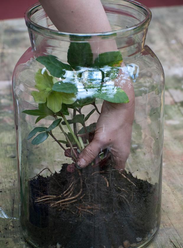 Diy Glass Jar Terrarium Terrariums Pinterest Orchid Terrarium