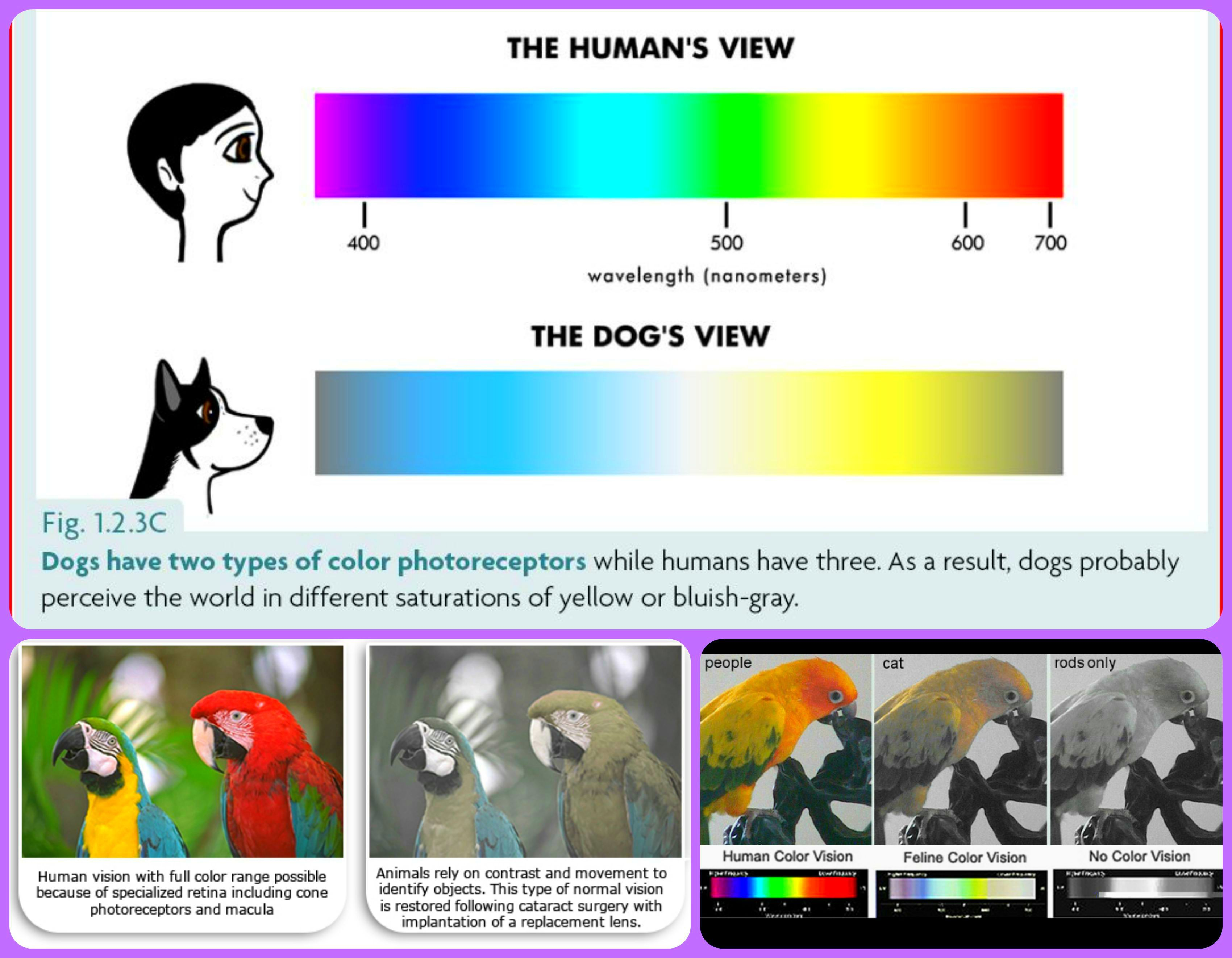 Mondays Myth Are Color Blind TRUTH Cats Dogs And Parrots CAN See Colors